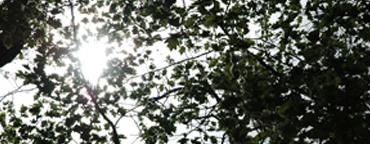 http://istoenormal.org/images/182.jpg